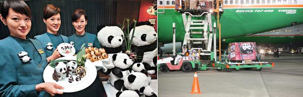 Image: Transporting Pandas